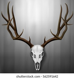 Realistic Deer Skull and antlers hanging on wall, Vector Illustration