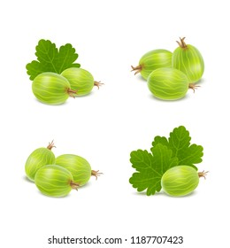 Realistic Detailed 3d Gooseberries with Green Leaves Icons Natural Fresh Sweet Isolated on White Background. Vector illustration of Ripe Gooseberry