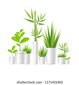 Realistic Detailed 3d Green Houseplant Pot Set Lively Foliage for Room, Hotel, Cafe or Store. Vector illustration