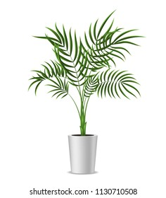 Realistic Detailed 3d Potted Green Tropical Palm Tree Houseplant for Decoration Interior Home and Office. Vector illustration