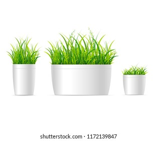 Realistic Detailed 3d Vivid Grass Houseplant Set Symbol of Decor for Home. Vector illustration of House Plant