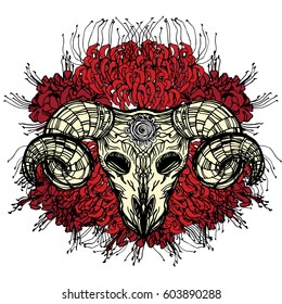 Realistic detailed hand drawn illustration of an old sheep skull with cracks and big horns on a background of red spider lilies. Graphic vintage tattoo style image on occult theme. T-shirt print.