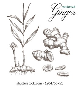 Red Ginger png images | PNGEgg