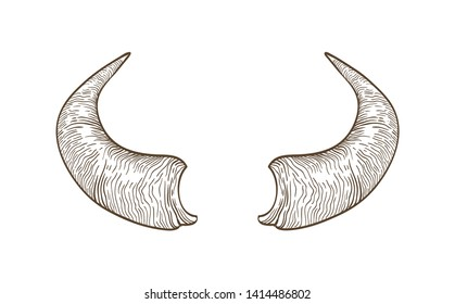 Realistic drawing of horns of cow, bull, bison, buffalo or other bovine animal hand drawn with contour lines on white background. Monochrome vector illustration hand drawn in elegant vintage style.