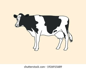 Realistic drawn spotted cow with udder stands on a light background