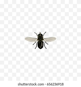 Realistic Fly Element. Vector Illustration Of Realistic Midge Isolated On Clean Background. Can Be Used As Midge, Fly And Gnat Symbols.