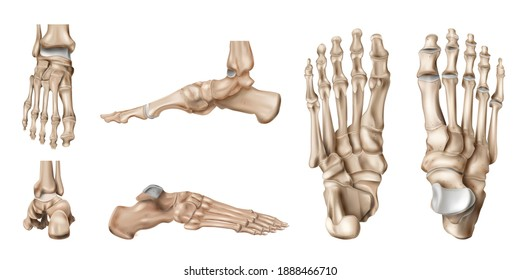 Realistic foot bones anatomy set with isolated side views of human footstep skeleton on blank background vector illustration