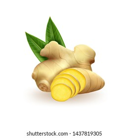 Realistic fresh ginger root on white background. Vector