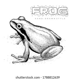 Realistic frog vector, hand drawn animal illustration