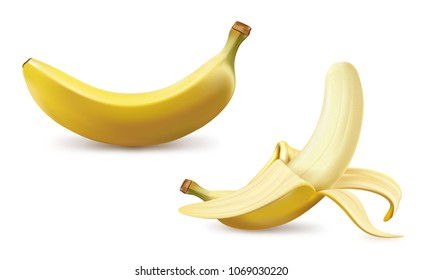 Realistic fruit vector illustration of ripe yellow bananas bunch isolated on white background. 3D model illustrate, copy and logo space for design.
