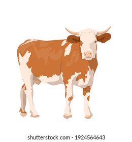 realistic ginger brown cow. dairy cattle. Swiss Brown, Ayrshire, Holstein, Milking White and Brown horns, Guernsey and Jersey Cow. beef