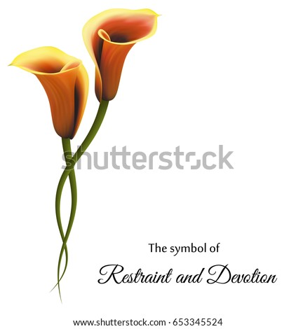 Realistic Gold Calla Lily Symbol Restraint Stock Vector Royalty