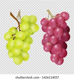 Realistic grapes isolated on transparent background. Vector bunches of red and white grapes. Illustration of grape food, juicy red and white harvest