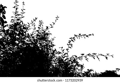 Realistic grass silhouettes from nature.Realistic silhouette of bush with bare branches  (Vector illustration).Eps 10