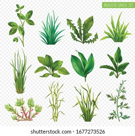 Realistic grasses herbs succulents green plants set with clover dandelion chives plantain isolated transparent background vector illustration