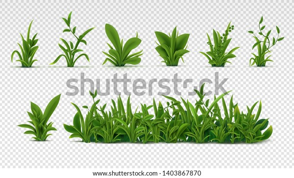 Realistic green grass. 3D fresh spring plants, different herbs and bushes for posters and advertisement. Vector set isolated objects on white