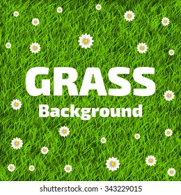 Flower small grass images stock photos vectors shutterstock realistic green grass background with small white flowers beautiful fresh lawn grass texture vector mightylinksfo