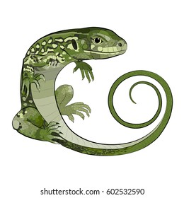 Realistic green lizard. The tail curl. Vector illustration.