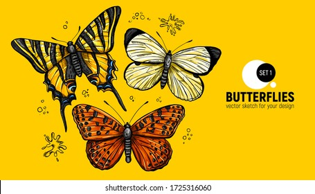 Realistic hand drawing butterflies set.