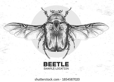 Realistic hand drawing Flower chafer beetle. Artistic Bug. Entomological vector illustration