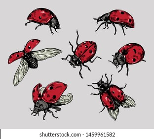 Realistic hand drawn vintage vector ladybugs set.
