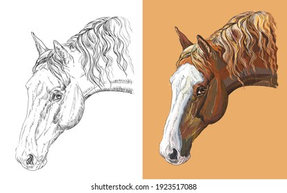 Realistic head of beautiful horse. Vector black and white and colorful isolated illustration of horse. For decoration, coloring book, design, prints, posters, postcards, stickers, tattoo, t-shirt