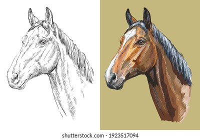 Realistic head of Trakehner horse. Vector black and white and colorful isolated illustration of horse. For decoration, coloring book, design, prints, posters, postcards, stickers, tattoo, t-shirt