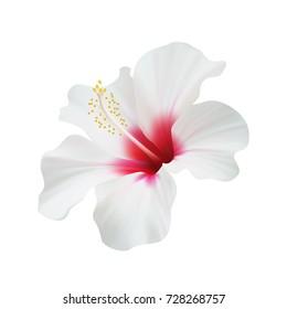 Realistic hibiscus. The symbol of rare elegant beauty.