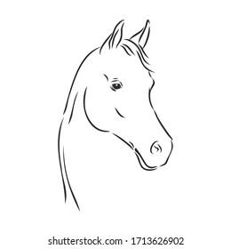 realistic horse portrait vector illustration, horse portrait, horse head, vector illustration