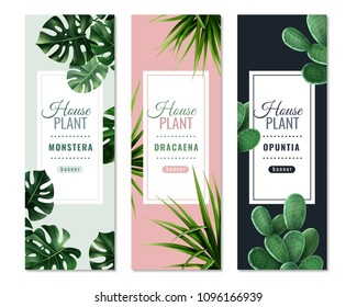 Realistic house plants vertical banners with monstera, dragon tree and prickly pear isolated vector illustration