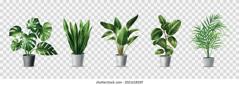 Realistic house plats set with monstera sansevieria banana palm ficus and rhopalostylis in pots on transparent background isolated vector illustration