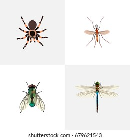 Realistic Housefly, Gnat, Damselfly And Other Vector Elements. Set Of Insect Realistic Symbols Also Includes Housefly, Arachnid, Insect Objects.