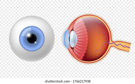 Realistic human eyeball. Eye retina structure, round iris and pupil texture, anatomy colorful object close up front, and side view eyeballs vector isolated set