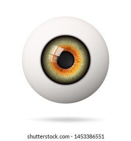 Realistic human eyeball. The retina is the foreground. Vector illustration.
