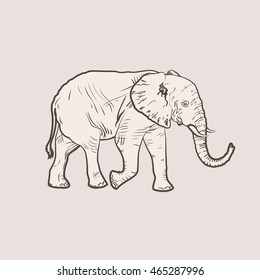Realistic illustration of an elephant, a figure similar to the engraving of clean vector lines. An elephant in full growth.Big elephant in profile walking.