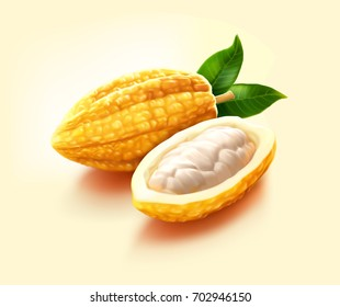a realistic illustration of fresh, green, raw, unripe yellow cocoas pod, a pod cut in half contains cocoa beans inside, isolated on cream background.