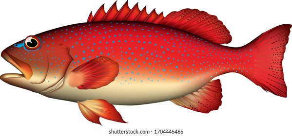 Realistic illustration of'Blue spotted grouper '. Vector eps format