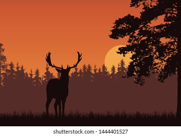 Realistic illustration of standing deer, grass and high tree. Forest under orange sky with sunrise or sunset. With space for text - vector