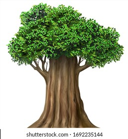 Realistic isolate fairy vector tree with leaves. Plant with green foliage. Forest nature and ecology