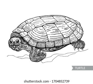 Realistic isolated turtle image, hand drawing black and white color