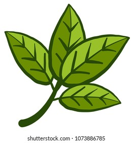 realistic isolated vector illustration of cola plant (cola acuminata)