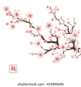 Realistic japan cherry branch with blooming flowers. Hieroglyph - Sakura. EPS 10 vector file included