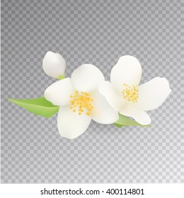Realistic Jasmine Flower Icon. Isolated On Transparent Background. Vector Clip-Art.