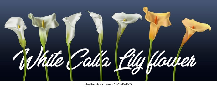 realistic Kala flower. for design of leaflets, banners. Colorful creative modern nature reality vector background with kala flower