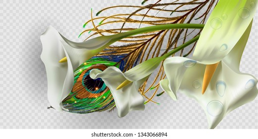 realistic Kala flower with peacock feathers. for design of leaflets, banners. Colorful creative modern nature reality vector background with kala flower