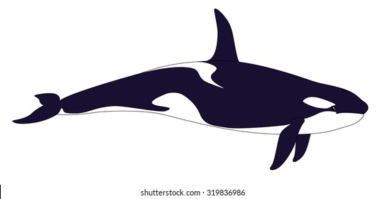 Realistic Killer Whale on a White Background. Grampus or Orcinus Orca. Vector Illustration in Simple Realistic Style for Your Artworks, Design and Prints. Marine Mammal - Killer Whale or Orca.