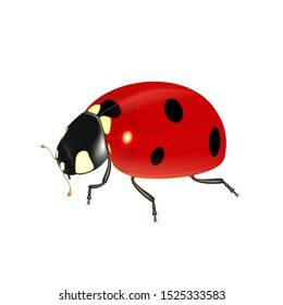 Realistic ladybug on a white background, ladybird for design and decoration. Vector illustration.