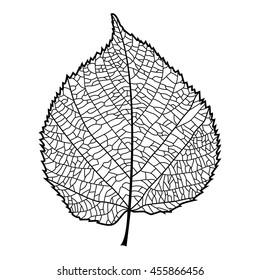 Realistic linden leaf. Black contour on white background. Vector illustration