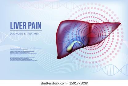 Realistic liver and gallbladder baner concept