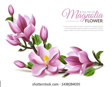 Realistic magnolia flowers branch on white background isolated elements easy to move and change